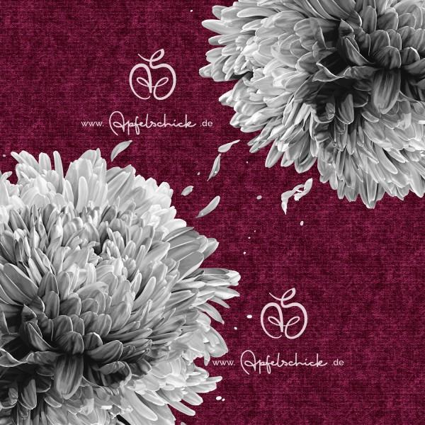 Big Chrysanthemum Beere-Grau BIO-Eigenproduktion (kbA)