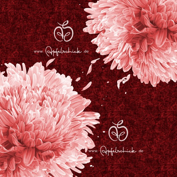 Big Chrysanthemum Rot-Rosé BIO-Eigenproduktion (kbA)