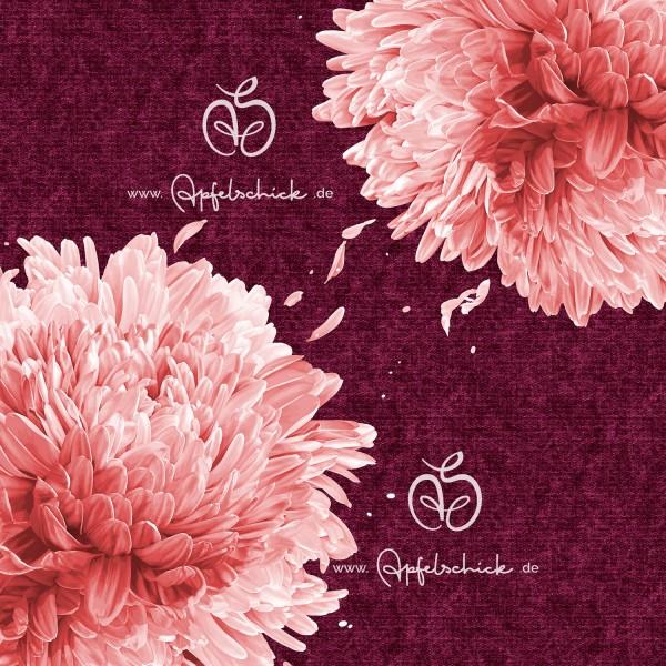 Big Chrysanthemum Beere-Rosé BIO-Eigenproduktion (kbA)
