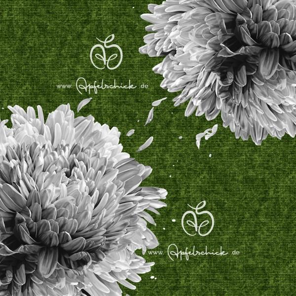 Big Chrysanthemum Grün-Grau BIO-Eigenproduktion (kbA)