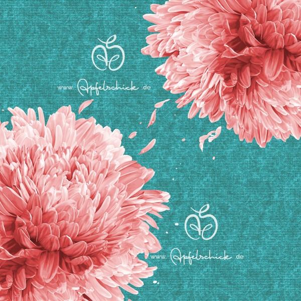 Big Chrysanthemum Aqua-Rosé BIO-Eigenproduktion (kbA)