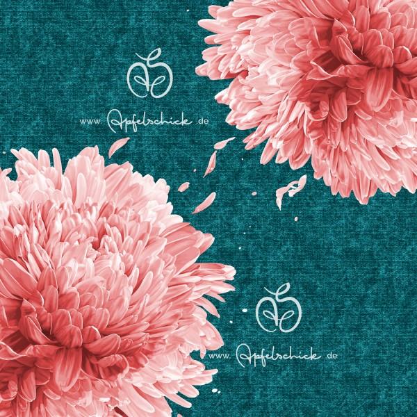 Big Chrysanthemum Petrol-Rosé BIO-Eigenproduktion (kbA)
